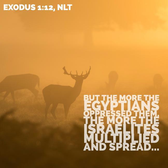 exodus-1_12